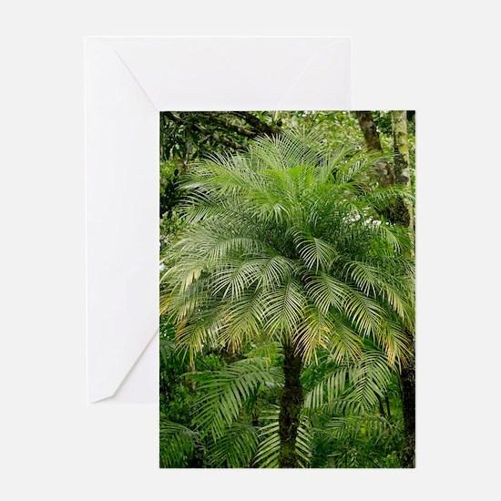 Pygmy date palm (Phoenix roebelenii) Greeting Card