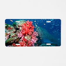 Pygmy sweeper fish Aluminum License Plate
