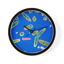 Pseudomonas aeruginosa bacteria Wall Clock