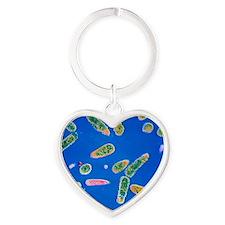 Pseudomonas aeruginosa bacteria Heart Keychain