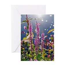 Purple loosestrife Greeting Card