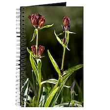 Purple Gentian (Gentiana purpurea) Journal