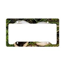 Puffball fungi License Plate Holder