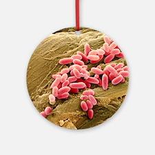 Pseudomonas aeruginosa bacteria, SE Round Ornament