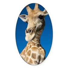 Portrait of Giraffe Giraffa Camelop Decal