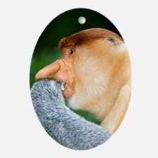 Proboscis monkey Oval Ornament