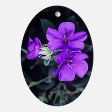 Princess flower (Tibouchina semideca Oval Ornament