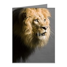 Lion's face Note Cards (Pk of 20)