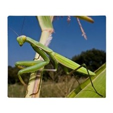Praying mantis Throw Blanket