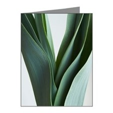 Green onion leaves close up Note Cards (Pk of 20)