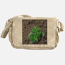 Potato plant Messenger Bag