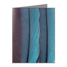 feathers Note Cards (Pk of 10)
