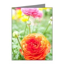 Close up of buttercup flower Note Cards (Pk of 20)