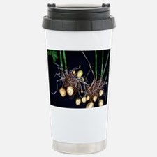 Potato roots Stainless Steel Travel Mug