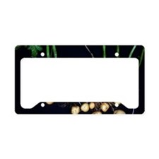 Potato roots License Plate Holder