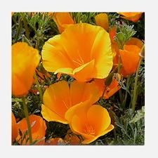 Poppies (Eschscholzia californica) Tile Coaster