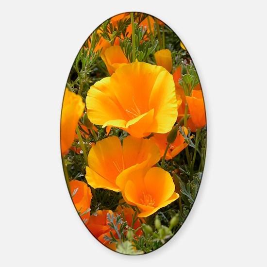 Poppies (Eschscholzia californica) Sticker (Oval)