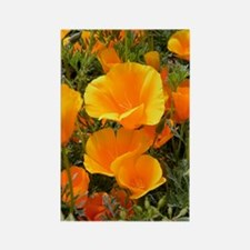 Poppies (Eschscholzia californica Rectangle Magnet