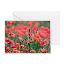 Poppies (Papaver rhoes) and grass Greeting Card