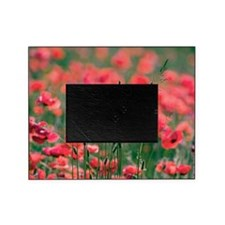 Poppies (Papaver rhoes) and grass Picture Frame