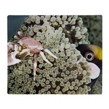 Porcelain crab Throw Blanket