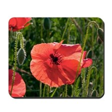 Poppies (Papaver rhoes) and grass Mousepad