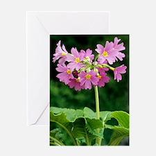 Polyanthus 'David Valentine' flowers Greeting Card