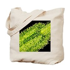 Pollination, SEM Tote Bag