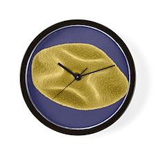 Pollen grain, SEM Wall Clock