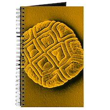 Pollen grain of Mimosa flower Journal
