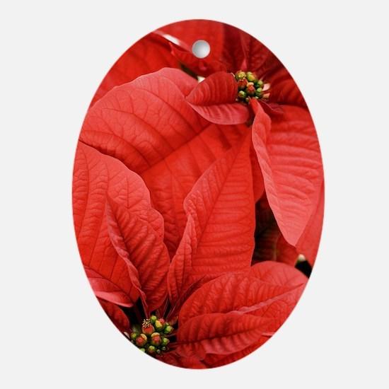 Poinsettia (Euphorbia pulcherrima) Oval Ornament