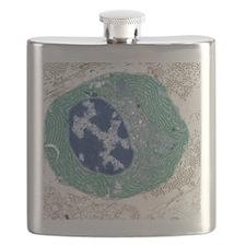 Plasma cell, TEM Flask