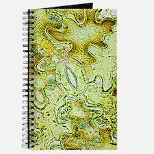 Plant stoma, light micrograph Journal