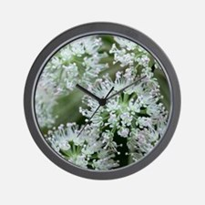 Plants from the Carrot family (Umbelife Wall Clock