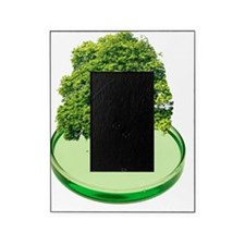Plant research, conceptual image Picture Frame