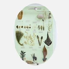 Plant group specimens, artwork Oval Ornament