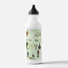 Plant group specimens, Water Bottle