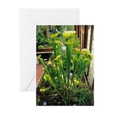 Pitcher plants Greeting Card
