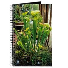 Pitcher plants Journal