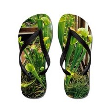 Pitcher plants Flip Flops