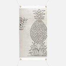 Pineapple, 16th century artwork Banner