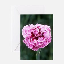 Pink flower (Dianthus 'Cheryl') Greeting Card
