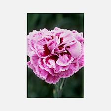 Pink flower (Dianthus 'Cheryl') Rectangle Magnet