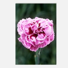 Pink flower (Dianthus 'Ch Postcards (Package of 8)