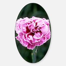 Pink flower (Dianthus 'Cheryl') Decal