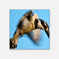 "Pied kingfisher in flight Square Sticker 3"" x 3"""