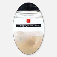 Pig foetus specimen Sticker (Oval)