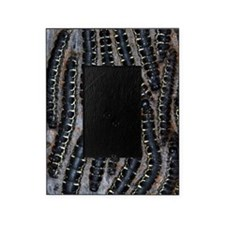 Pine processionary moth caterpillars Picture Frame