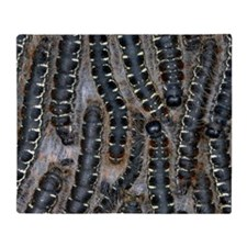 Pine processionary moth caterpillars Throw Blanket