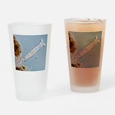 Philodina rotifer, light micrograph Drinking Glass
